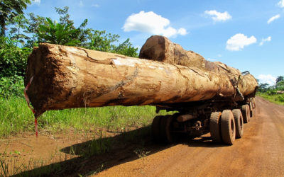 Chinese Logging in Gabon: Neocolonialism or a New Way Forward?