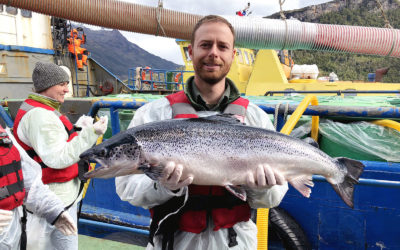 Salmon farming and sustainability in Chile: Q&A with Erb student Zach Friedman