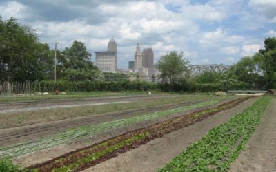 Local Food: Values, Politics and Business