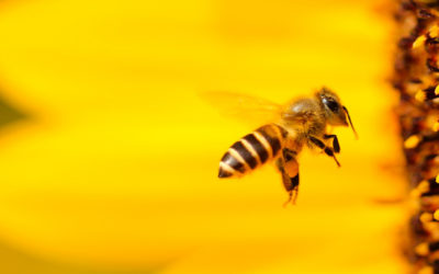 Sustainability in Detroit, Part 2: Making way for bees