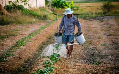 Structuring international development decisions: confronting trade-offs between land use and community development in Costa Rica